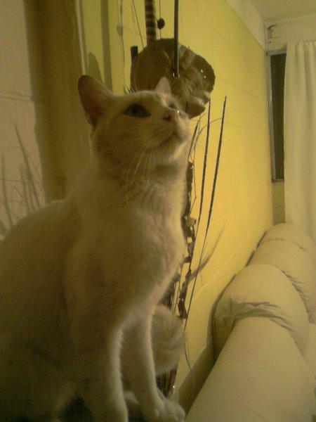Curso cuidado y crianza de Gatos