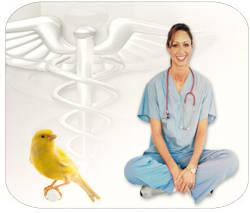 Cursos gratis de Animales, Aves y Peces