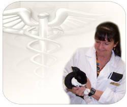 Curso Veterinaria y primeros auxilios animales